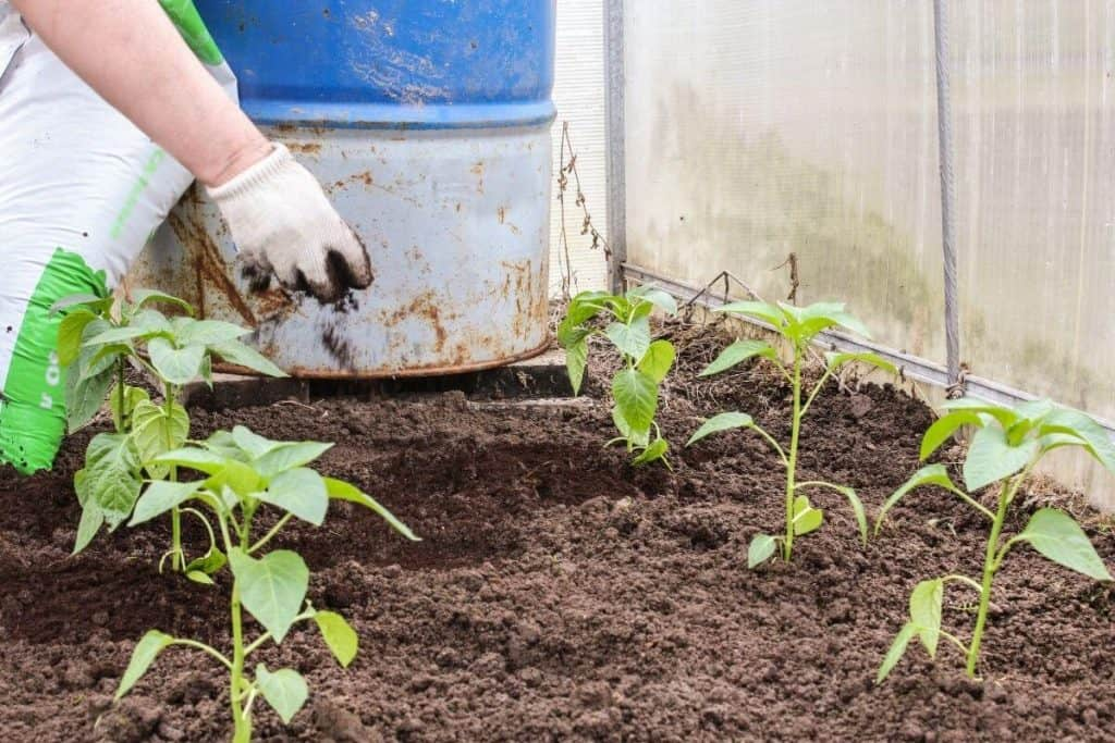 Which Plants Do Not Like Coffee Grounds
